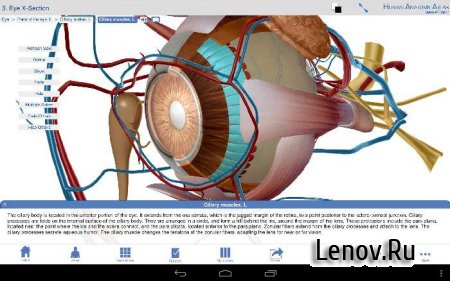 Human Anatomy Atlas 2020: Complete 3D Human Body v 2020.0.73 Мод (много денег)